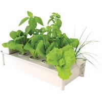 Hydrofarm Hydroponic Salad Box Kit from Blain's Farm and Fleet