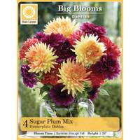 Longfield Gardens 4ct Dahlia Sugar Plum Mix from Blain's Farm and Fleet