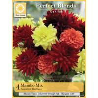 Longfield Gardens 4 Count Mambo Mix Dahlia from Blain's Farm and Fleet