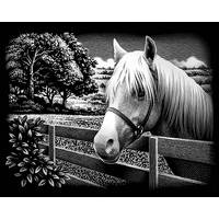 Reeves International Pony Scraperfoil from Blain's Farm and Fleet