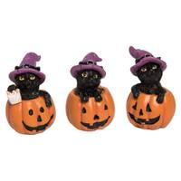 Transpac Imports Inc. Res Mini Kitten in Pumpkin Assortment from Blain's Farm and Fleet