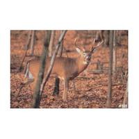 Delta McKenzie Targets Whitetail Deer Eastern Game Series Large Game Target from Blain's Farm and Fleet