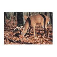 Delta McKenzie Targets Whitetail Deer Paper Target from Blain's Farm and Fleet