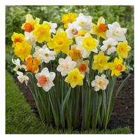 Longfield Gardens Long Lasting Assorted Daffodil Bulbs from Blain's Farm and Fleet