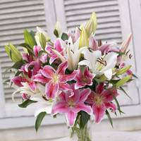Longfield Gardens Assorted Oriental Lily Bulbs from Blain's Farm and Fleet