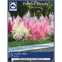 Longfield Gardens Assorted Astilbe Bulbs from Blain's Farm and Fleet