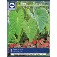 Longfield Gardens Elephant Ear Bulbs from Blain's Farm and Fleet