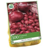 Longfield Gardens Red Comred Onion Bulbs from Blain's Farm and Fleet