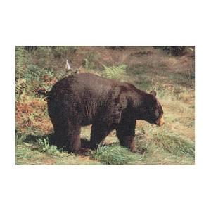 Delta McKenzie Targets Black Bear Paper Target