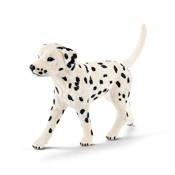 Male Dalmatian