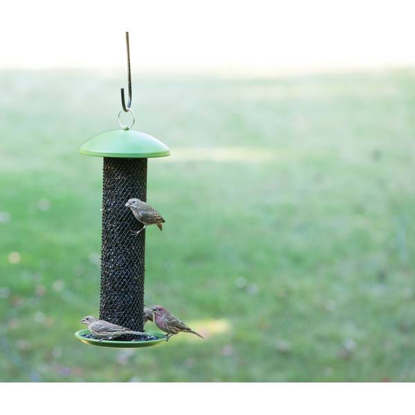 NO/NO Straight-Sided Sunflower Tube Wild Bird Feeder