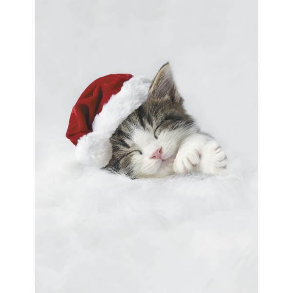 12-Count Sleepy Kitten Notelet Christmas Cards