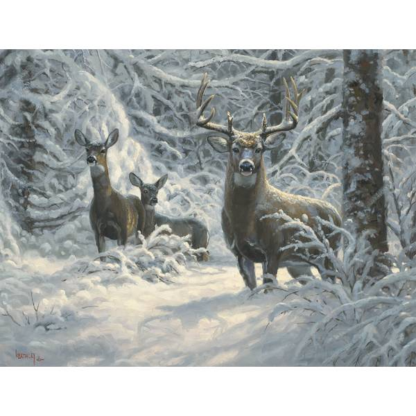 12-Count Deer Notelet Christmas Cards