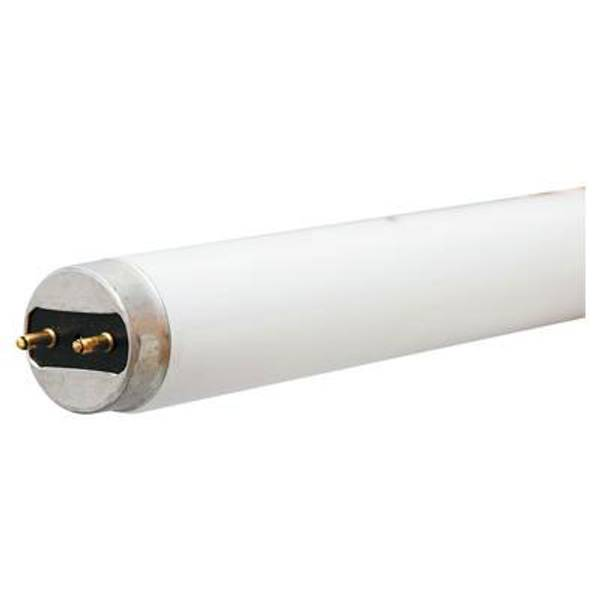 T8 Cool White Appliance Fluorescent Bulb