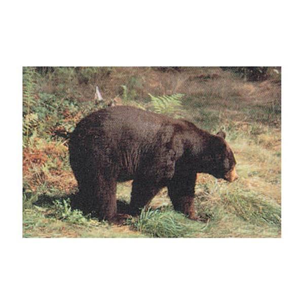 Black Bear Paper Target