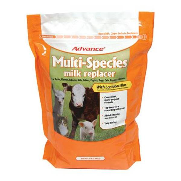 Multi-Species Milk Replacer with Lactobacillus