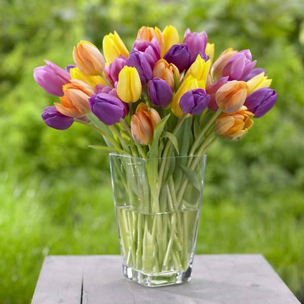 Bright Mix Triumph Tulip Bulbs Assortment