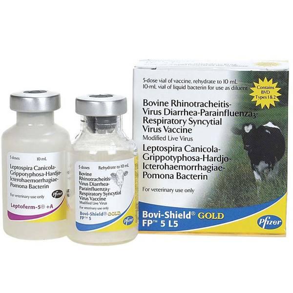 FP 5 L5 Bovine Rhinotracheitis Virus Diarrhea - Parainfluenza Respiratory Syncytial Virus Vaccine