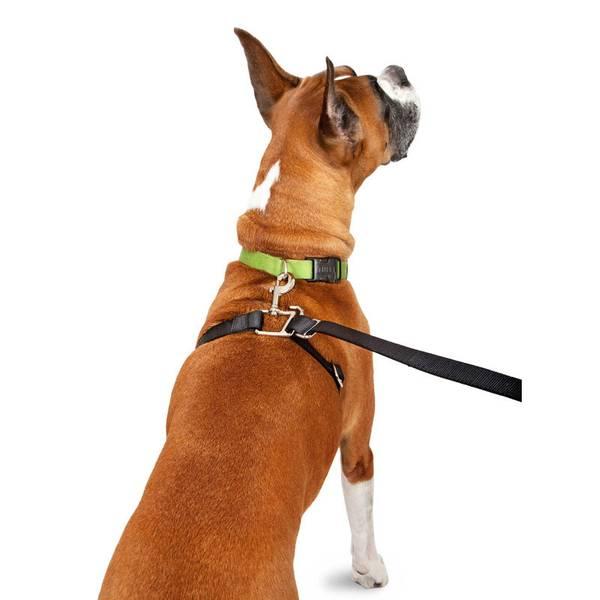 Small Dog Leash