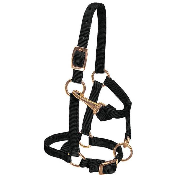 Miniature Horse Adjustable Chin & Solid Brass Snap Halter - Average