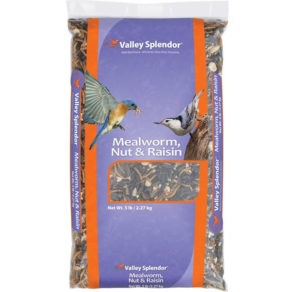 Mealworm, Nut & Raisin